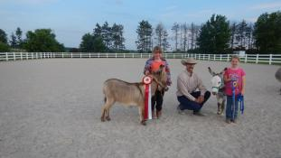 Timber Lane Acres Miniature Donkeys - Show Results